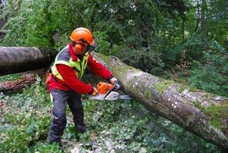 """Bases du travail avec la tronçonneuse et travailler en sécurité sur le bois couché au sol (Module """"FW-MS1"""")"""