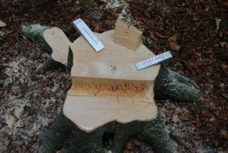 """Abattage d'arbres et façonnage du bois en sécurité (Module """"FW-MS2"""")"""