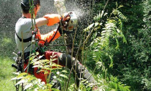 Travaux en toute sécurité lors de l'élagage d'arbres sur cordes avec tronçonneuse (Module «SKT-MS»)